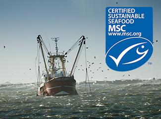Brockfield Fisheries